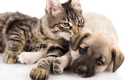 Revisión y una vacuna a elegir para perro o gato con opción a microchip desde 19,90 € en Hostal Mascotas Veterinario Oferta en Groupon