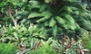 Bloom Nursery - Bloom Nursery: Plants at Bloom Nursery in Southwest Ranches (Up to 58% Off). Three Options Available.