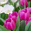 $10 for Plants and Garden Supplies in Maple Heights