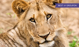 Wildlife Safari: Two Adult or Children's Tickets to Wildlife Safari (Up to 39% Off)