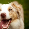 56% Off at Affordable Animal Care
