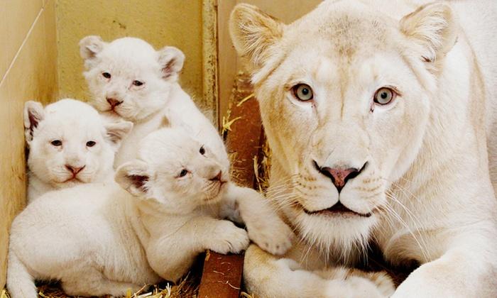 Zoo Safari Borysew - Poddębice: Zoo Safari Borysew: bilety dla 2 osób za 32,99 zł i więcej opcji