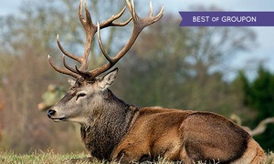 The Scottish Deer Centre: Entry for Two or Family to The Scottish Deer Centre (Up to 53% Off)