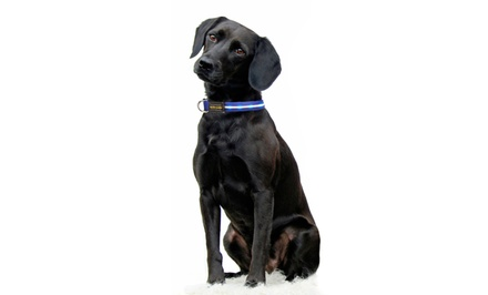 Series 3000 USB Rechargeable LED Collar or Leash