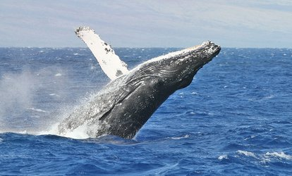 Three-Hour Whale Safari for 1 ($35), 2 ($69), 4 ($135) or 6 People ($199) at King George Sound Safari (Up to $450 Value)