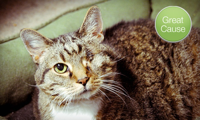 Furkids, Inc. - Atlanta: $10 Donation to Help Animals with Special Needs