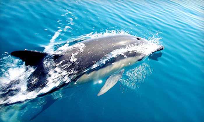 Jax Water Tours - Vilano Pier: Manatee and Dolphin Eco Cruise for Two, Four, or Six from Jax Water Tours (Up to 54% Off)
