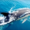 Up to 54% Off Eco Cruise from Jax Water Tours