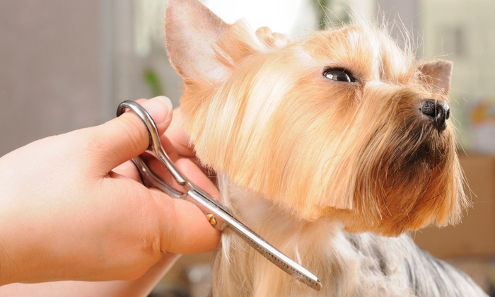 Happy Tails Dog And Cat Grooming - Simsbury: Grooming Services from Happy Tails Grooming and Doggie Daycare (45% Off)