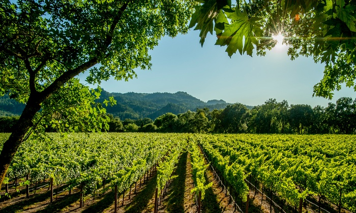 Napa & Sonoma Taste of Groupon Getaway for Two Sweepstakes: Enter to Win a Napa & Sonoma Taste of Groupon Getaway for Two with Airfare, Hotel, Dinner, Winery Tour, and More