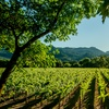 Enter to Win a Napa Valley Foodie Vacation for Two