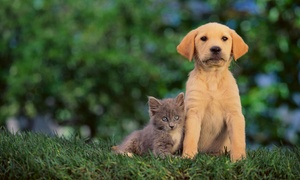 K Mcauley Photography: 60-Minute Pet Photo Shoot with Retouched Digital Images from K McAuley Photography (75% Off)