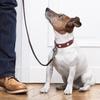 Up to 72% Off Dog Walking at K9CareLBK
