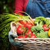$10 for Organic Groceries from Eat Green Organics