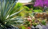 Los Angeles County Arboretum and Botanic Garden - Arcadia: One-Year Family Membership to Los Angeles County Arboretum & Botanic Garden in Arcadia (Up to 51% Off)