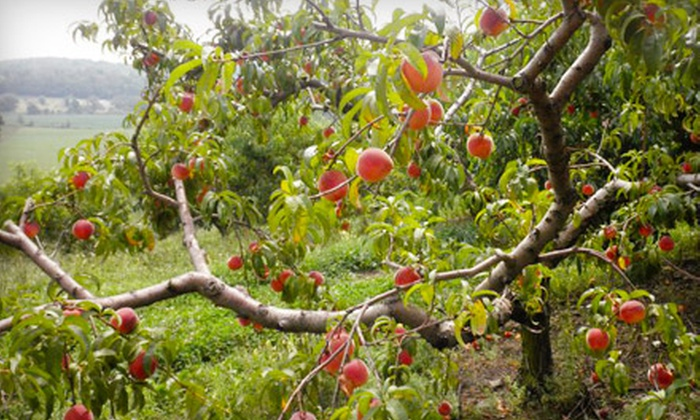 Arrowhead Orchard - Paris: Orchard Outing and 5 lbs. of Apples for Couple or Family at Arrowhead Orchard
