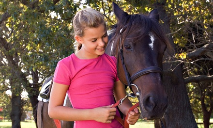 One or Two 60-Minute Horseback-Riding Lessons at Lone Star Horsemanship, Inc. in Tomball (48% Off)