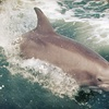 Up to 65% Off Whale or Dolphin Cruise