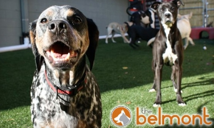 The Belmont Pet Resort and Daycare - Bellmont/Hillsboro: Doggie Daycare Services at the Belmont Pet Resort and Daycare. Two Options Available.
