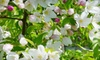 AMHERST NURSERIES - Amherst: $99 for a Shade Tree or Flowering Tree at Amherst Nurseries in Amherst (Up to $330 Value)