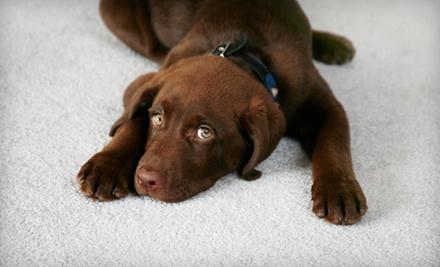 So Fresh & So Klean Carpet & Upholstery Cleaners - So Fresh & So Klean Carpet and Upholstery Cleaners in