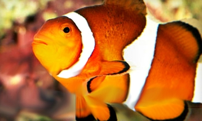 Saltwater Fanta-Seas - Portland: $20 for $40 Worth of Saltwater Fish, Aquariums, and Pet Supplies at Saltwater Fanta-Seas