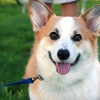 Up to 55% Off Pet-Grooming Services