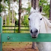 Half Off Riding at Ace of Hearts Ranch in Cocoa