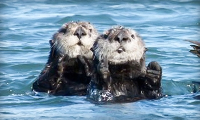 Blue Water Ventures - Moss Landing: $40 for One Seals and Sea Otter Watch by Kayak: Elkhorn Slough Trip from Blue Water Ventures (Up to $80 Value)