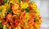 House of Wonders - Orillia: $15 for $30 Worth of Fresh Flowers and Potted Plants at House of Wonders