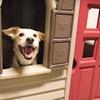 Half Off Pet Services at Care-A-Lot Pet Supply