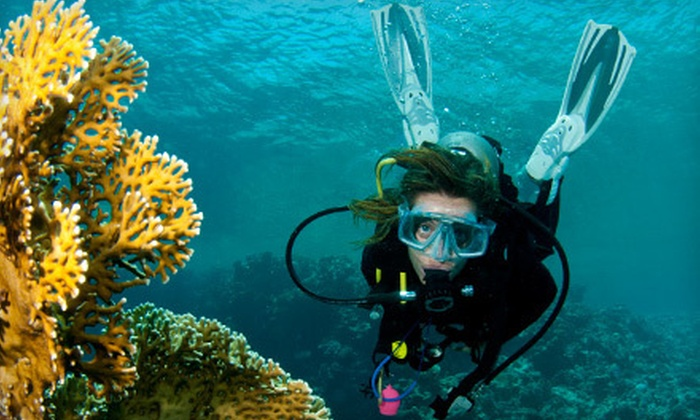 New England Dive Center - Wallingford: $30 for a Discover Scuba Course at New England Dive Center in Wallingford ($75 Value)