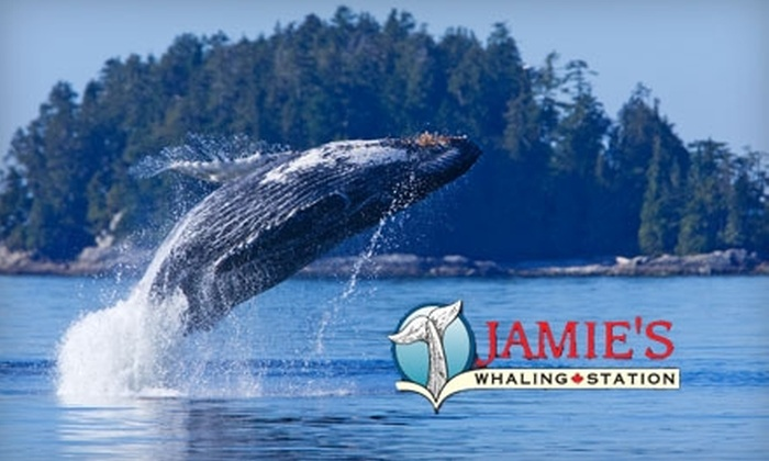 Jamie's Whaling Station - Multiple Locations: $49 for a Whale Watching Tour at Jamie's Whaling Station