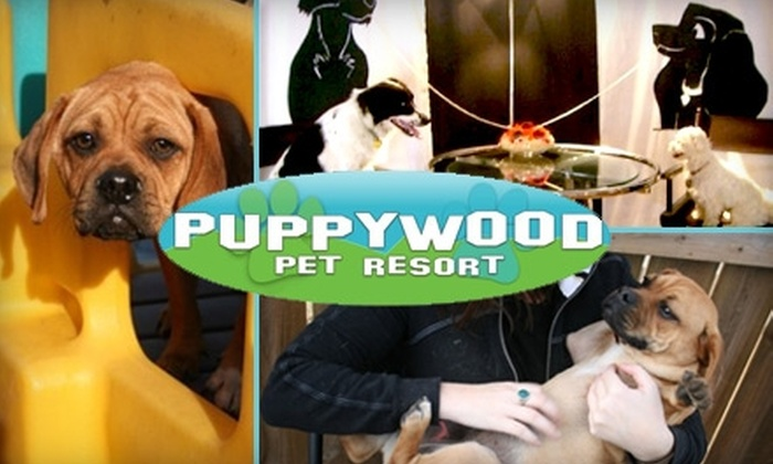 Puppywood Pet Resort - Sycamore: $35 for Five Days of Daycare at Puppywood Pet Resort