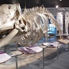 New Bedford Whaling Museum – Up to 55% Off Tickets