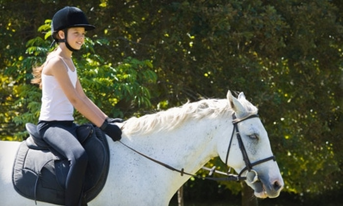Bay Area Equestrian Center - Pearland: $40 for Two Private Horseback-Riding Lessons at Bay Area Equestrian Center