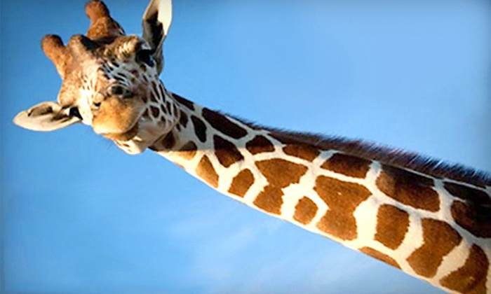 African Safari Wildlife Park - Danbury: $8 for One Admission to African Safari Wildlife Park in Port Clinton (Up to $18.95 Value)