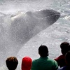 Up to 42% Off Whale-Watching Journey in Gloucester
