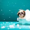 Up to 57% Off Dog Spa Bath