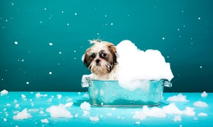 Happy Tails Pet Spa & Resort: $15 for Dog Spa Bath Package with Bath, Ear Cleaning, and Nail Trim at Happy Tails Pet Spa & Resort (Up to $35 Value)
