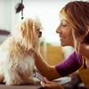 Up to 60% Off Dog-Grooming Services