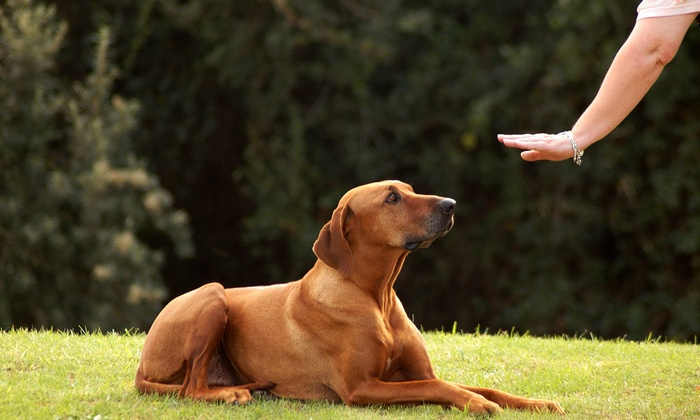 House of Dog Training - Stratton Meadows: $89 for $178 Worth of Services at House of Dog Training