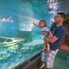 SEA LIFE Arizona - Tempe: $9 for One Adult Admission to Sea Life Arizona in Tempe (Up to $18 Value)