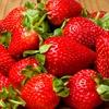 June-Bearing Strawberry Plants