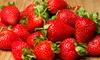 June-Bearing Strawberry Plant Seeds: June-Bearing Strawberry Plants