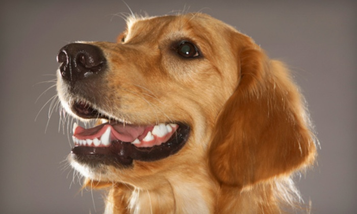 Southern Hills Veterinary Hospital - Heller Park: $115 for a Doggy Teeth-Cleaning Treatment at Southern Hills Veterinary Hospital ($230 Value)