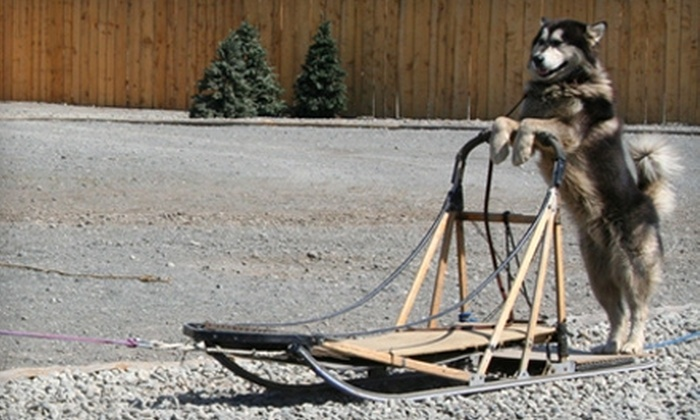 WildRide Sled Dog Rodeo - Anchorage: $17 for One Admission to WildRide Sled Dog Rodeo (Up to $35 Value)