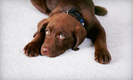 Oxy Green Carpet Cleaning  - Oxy Green Carpet Cleaning in