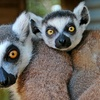 Up to 59% Off Zoo Visit or Tour for Two