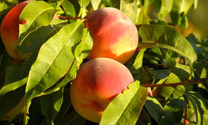 Valicoff Family Farms - Multiple Locations: $15 for a 20-Pound Box of Yakima Valley Peaches from Valicoff Family Farms ($30 Value)